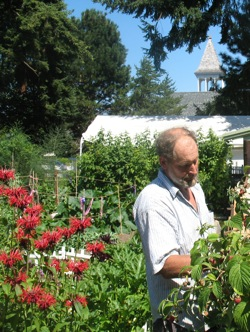 Ed Cannard picks raspberries at Eagle Harbor Congregational Church's community garden.