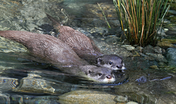 blog.otters