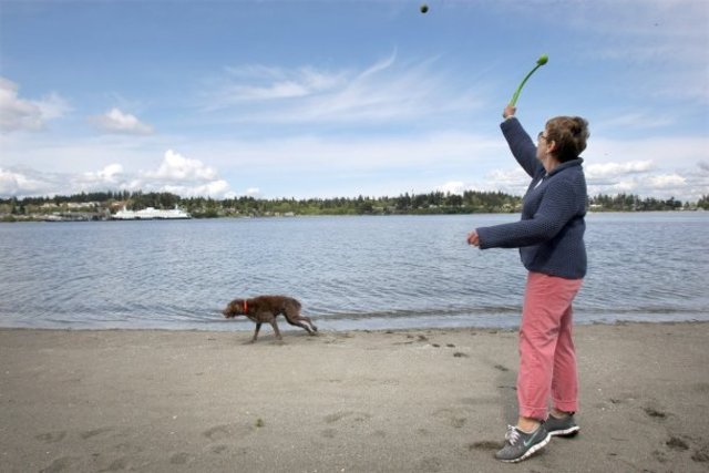 Claire Hicks plays fetch in the water with her dog French at Pritchard Park on Bainbridge Island. (LARRY STEAGALL / KITSAP SUN)