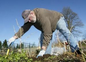 A Bremerton gardener at Blueberry Park. Photo by Lenna Himmelstein, Kitsap Sun.