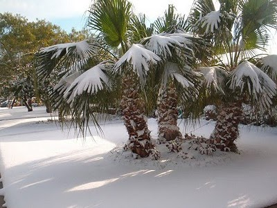 Global-Warming-Strikes-Florida-with-SNOW-762219