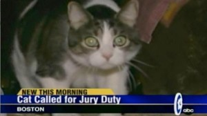 jury-duty-cat1