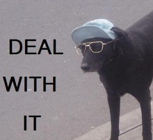 dog deal with it