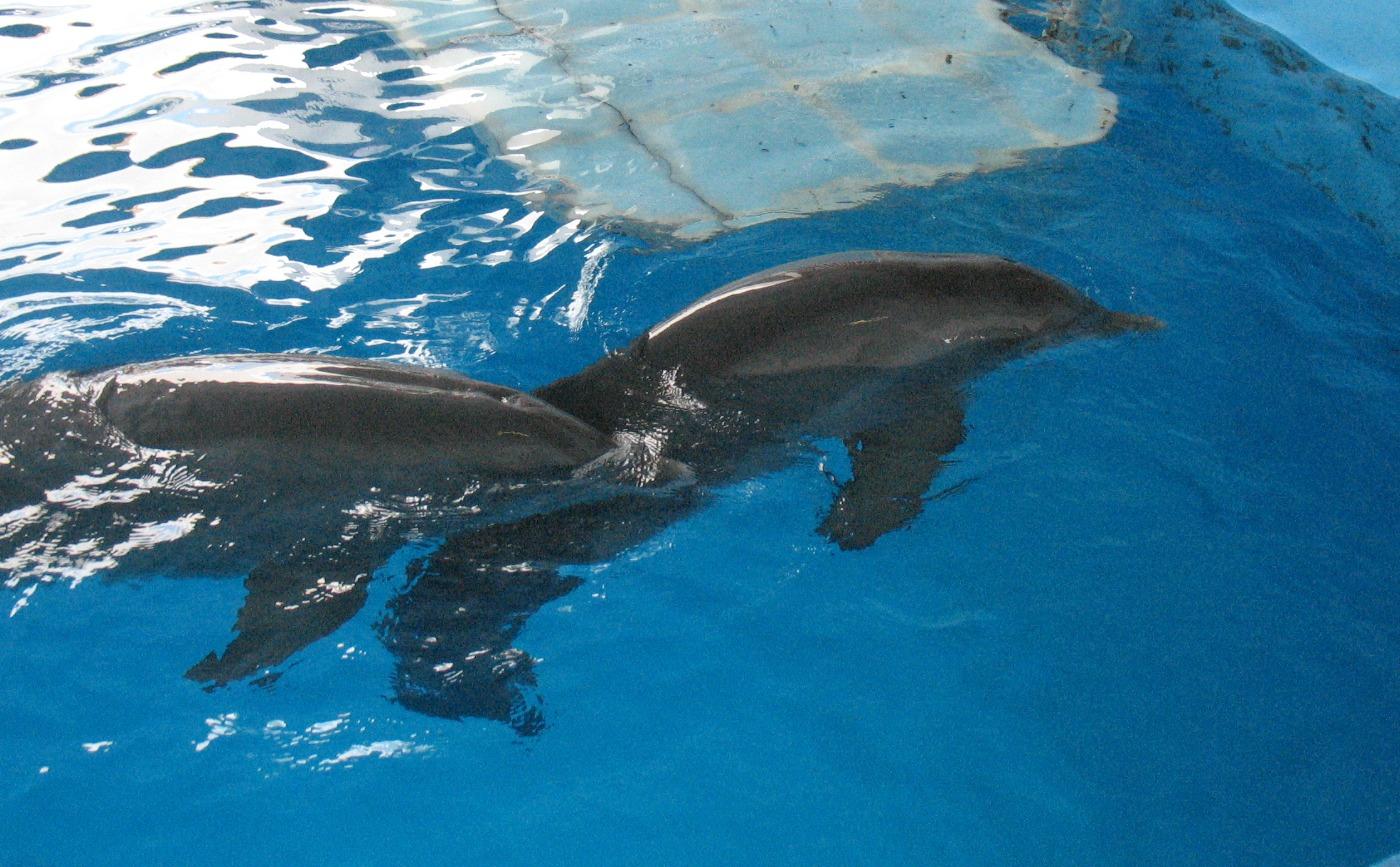 Clearwater Marine Aquarium Peninsular Thinking