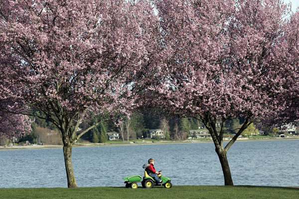 Jason Olivas, Jr. ,2,of Silverdale drives his electric tractor at Silverdale Waterfront Park on Tuesday. It's an early spring as the daffodils and tree blossoms are in bloom. Larry Steagall | Kitsap Sun