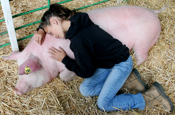 Amber Bumbalough,10 , snuggles with her pig Lucky prior to the start of Saturday's market auction at the Kitsap County Fair. MEEGAN M. REID | KITSAP SUN.