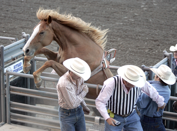 Kitsap Fair and Stampede cowboys move away from the chutes as Red Headed Stepchild tries to jump out during the bareback riding competition Saturday night. (LARRY STEAGALL)