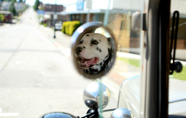 Reflected in the side mirror of owner Pat Davison's 1930 Model A Ford, Clipper waits for Davison outside of the downtown Bremerton Library on Saturday. Davison drives the vintage car everyday. MEEGAN M. REID | KISTAP SUN