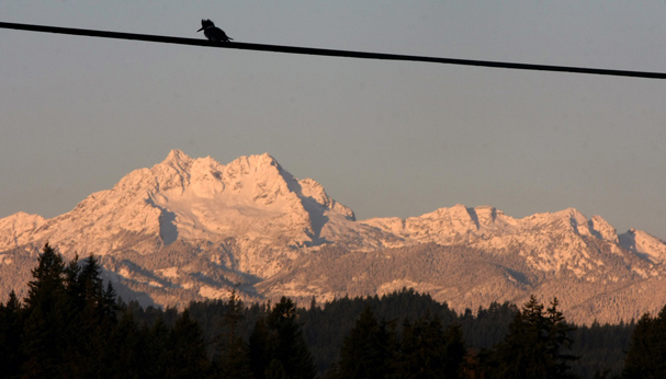 A kingfisher is perched on a wire above the new snow on the Brothers at sunrise Friday. (LARRY STEAGALL / KITSAP SUN)