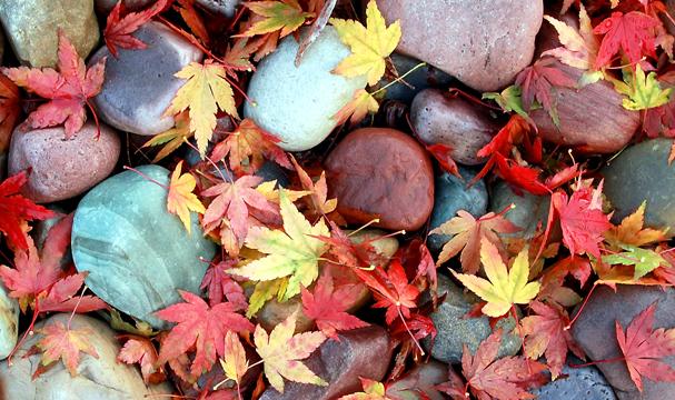 WA Leaves