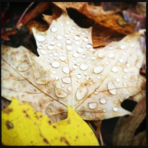 BLOGfall_leaves