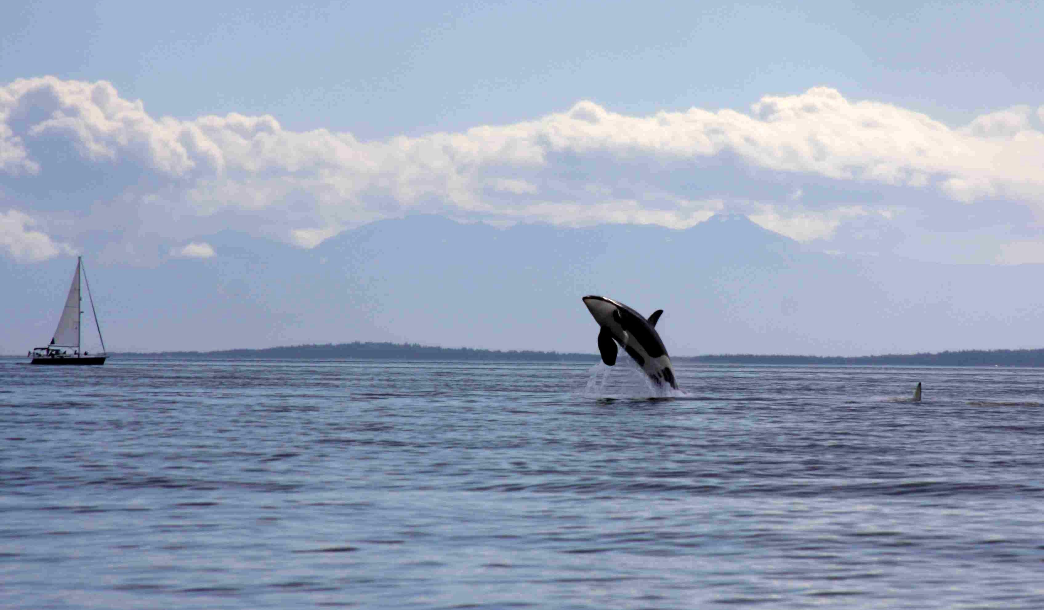 whales2012jpg