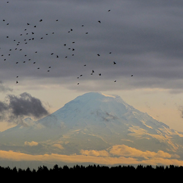 Mount Rainier peeks out from the clouds as a flock of birds passes as seen from East Bremerton. (LARRY STEAGALL / KITSAP SUN)