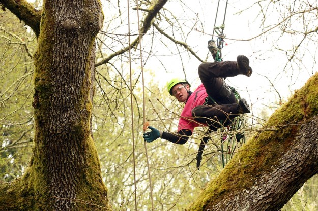 Rick Denbeau, of Louisville, Kentucky, swings to a branch as he competes in the Bainbridge Island Open Master's climb on Saturday, April 20, 2013. (MEEGAN M. REID / KITSAP SUN)