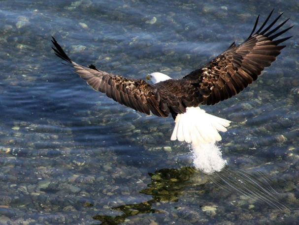 eaglebrakes1
