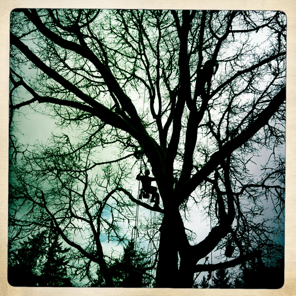 """Tree Climbing Competition Silhouette"" by Meegan M. Reid"
