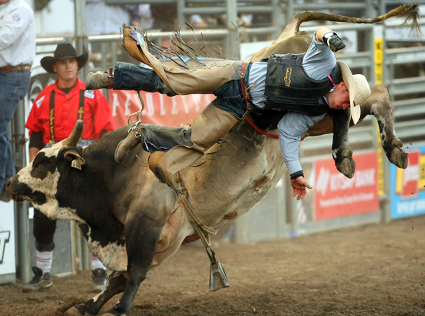 Michael Riggs Jr., of Statesboro, GA, is thrown from his bull named Juicy Vindication during the Xtreme Bulls at the Kitsap County Fairgrounds on Wednesday, August 21, 2013. (MEEGAN M. REID / KITSAP SUN)