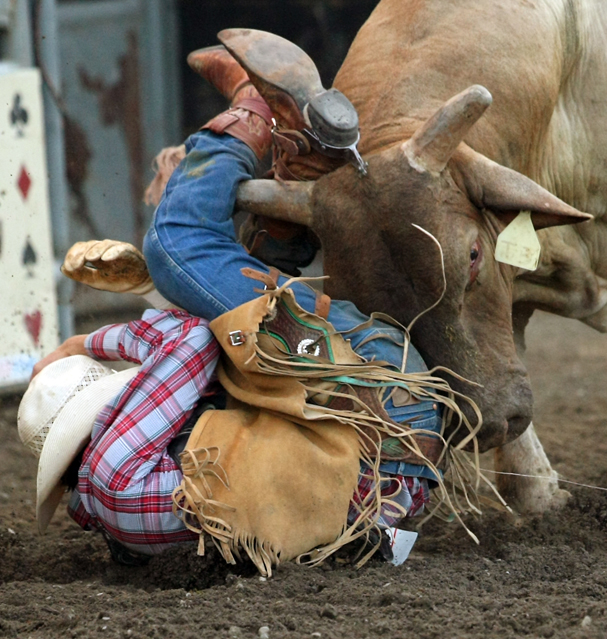 A bull named Dump Truck gets a piece of cowboy Dallee Mason, of Weiser, ID. after his dismount during the Xtreme Bulls at the Kitsap County Fairgrounds on Wednesday, August 21, 2013. (MEEGAN M. REID / KITSAP SUN)