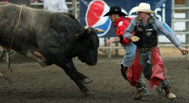 Xtreme Bulls at the Kitsap County Fairgrounds on Wednesday, August 21, 2013. (MEEGAN M. REID / KITSAP SUN)