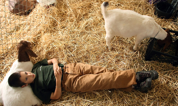 Jonathan Hoenig, 12, of Port Orchard, uses his goat cinnamon as a pillow as he relaxes in the sheep barn at the Kitsap County Fairgrounds on Wednesday. (MEEGAN M. REID / KITSAP SUN)