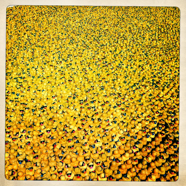 """A Sea of Rubber Duckies"" by Meegan M. Reid"