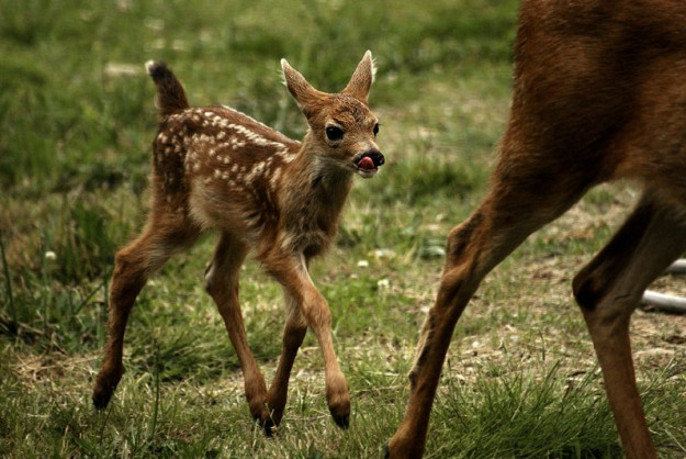 """""""Fawn-Mother"""" by Eli Owens"""