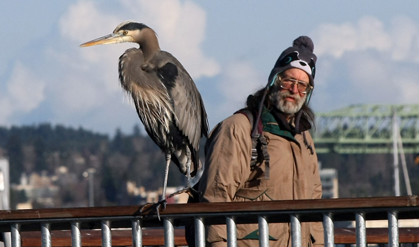 Steve Johnson wanders past a blue heron perched on the railing of DeKalb Pier in Port Orchard on Monday, December 2, 2013. (MEEGAN M. REID / KITSAP SUN)