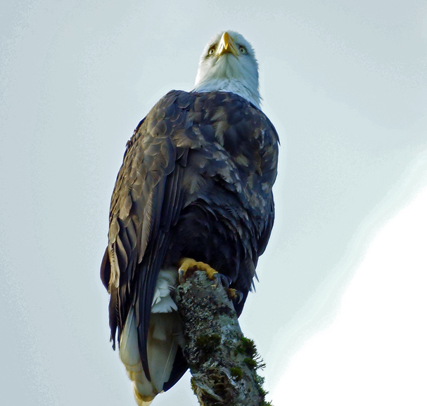 """""""Eagle View"""" by Charles Parker"""