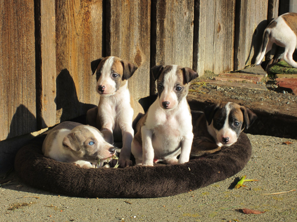 """""""New Year's Pups """" by Emily Wilmot"""