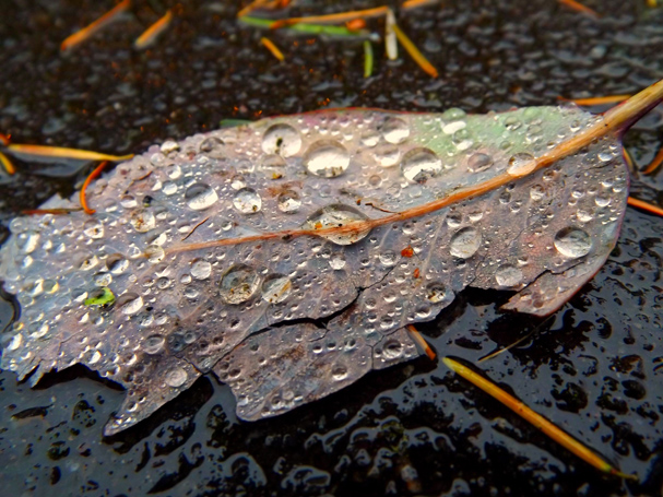 Raindrops by Stacy Lynch
