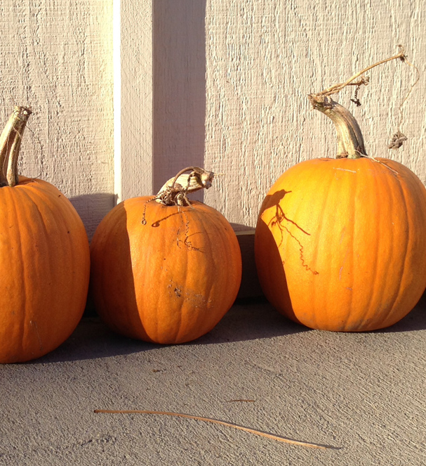 """Pumpkin Trio"" by Liz Newman"