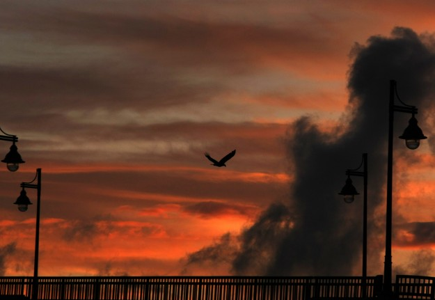 A bald eagle flies over the Manette Bridge at sunset on Wednesday. (LARRY STEAGALL / KITSAP SUN)