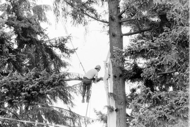 6/23/83 Lightning Hit Tree @ Poulsbo Steve Zugshwerdt / Bremerton Sun