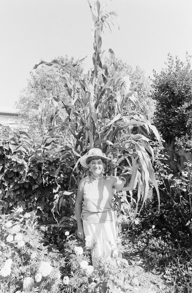 8/18/83 Victoria Bennett and 14 foot corn stalk. MS / Bremerton Sun