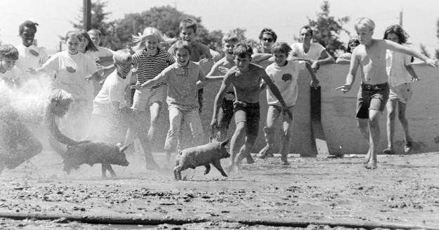 July 10, 1970 Greased Pig Contest Bremerton Sun / Richard Ellis