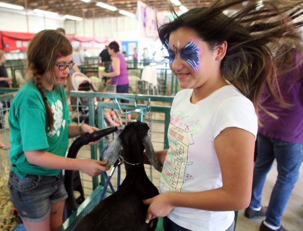 The air of the blow dryer sends 11-year-old Kyah Martinez's hair flying as she helps her friend Autumn Keehan, 9, wash and dry her 4-H goat named Bella at the Kitsap County Fairgrounds on Thursday August 22, 2013. (MEEGAN M. REID / KITSAP SUN)