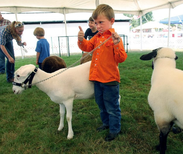 Cordell Burt, 4, gives a big thumbs up to the judge after competing in the pee-wee division of sheep at the Kitsap County Fair & Stampede. (LARRY STEAGALL / KITSAP SUN)