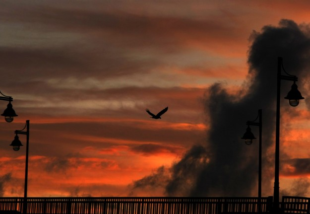 A bald eagle flies over the Manette Bridge at sunset on Wednesday. LARRY STEAGALL / KITSAP SUN