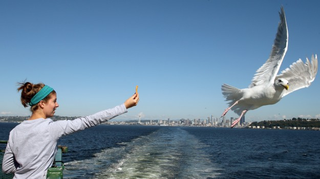 Ariel Clark, of Portland, Ore. tries to get a seagull to take a Cheeto out of her hand as she rides the Seattle to Bremerton ferry on Thursday, September 4, 2014. (MEEGAN M. REID / KITSAP SUN)
