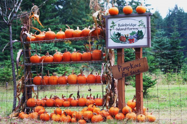 Pumpkins for Sale by Mary Moff Saurdiff