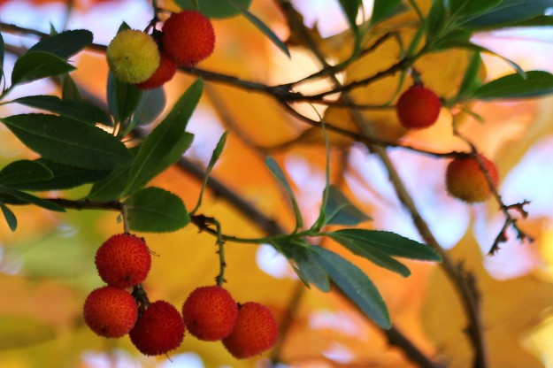 Fall Berries, by Mary Moff Saurdiff