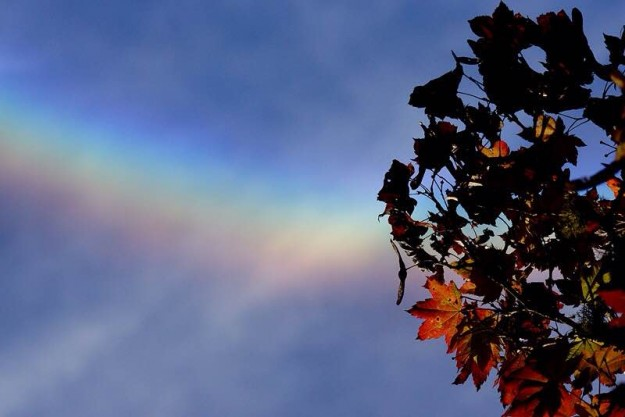 Circumzenithal Arc above Autumn Maple by Eli Owens