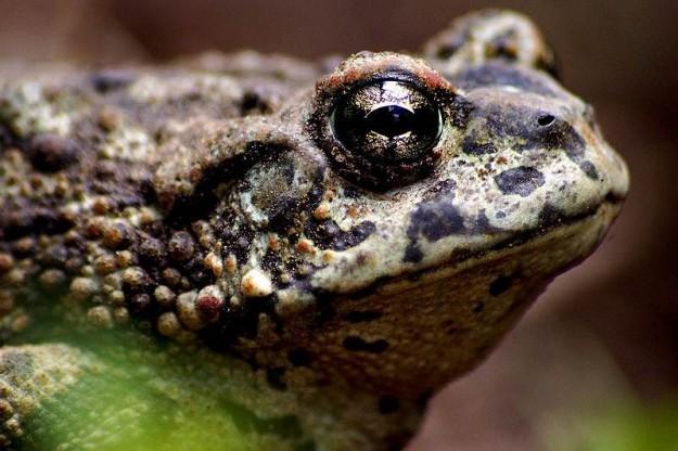 Mr. Toad by Eli Owens