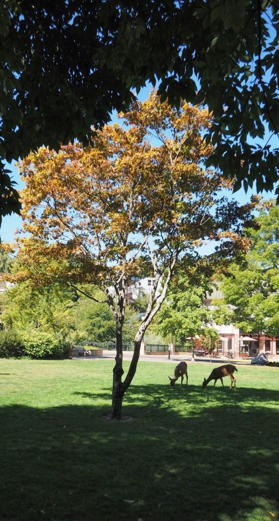 Lithia Park Deer by Steve Johnson