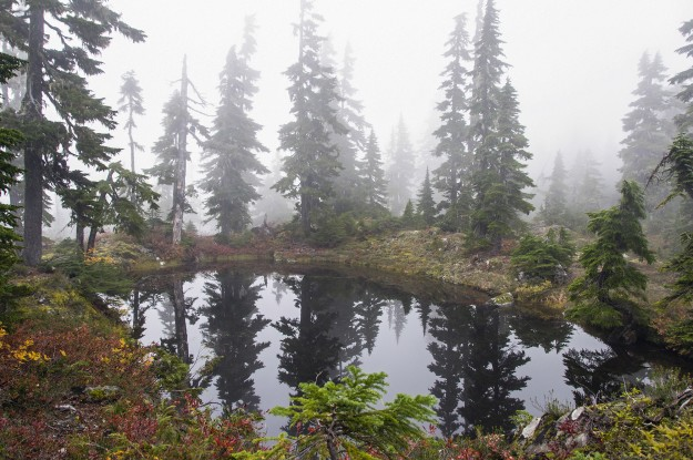 Fall colors and fog at a tarn near Mildred Lakes by Shawna Whelan
