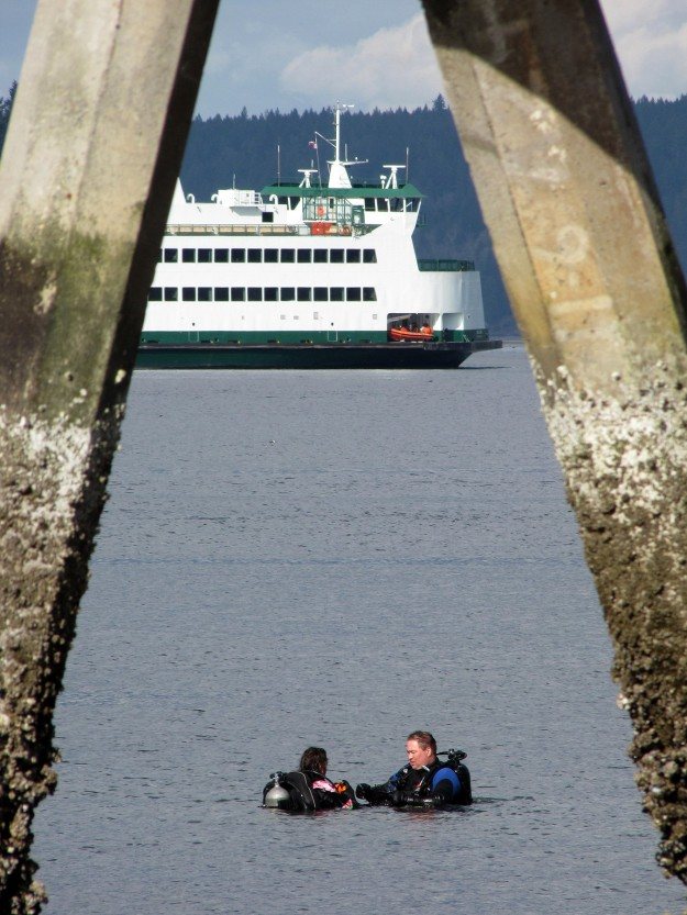 The Washington State ferry Salish pulls into Bremerton on Sunday as divers stand in the shallow water at low tide framed by pillings of the Annapolis Dock. LARRY STEAGALL / KITSAP SUN