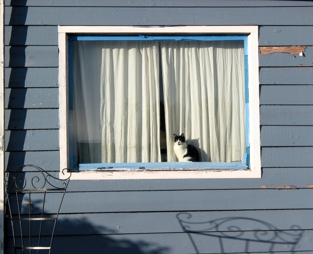 A cat peers out a window in Manette as the sun makes an appearance between rain storms on Thursday. LARRY STEAGALL / KITSAP SUN