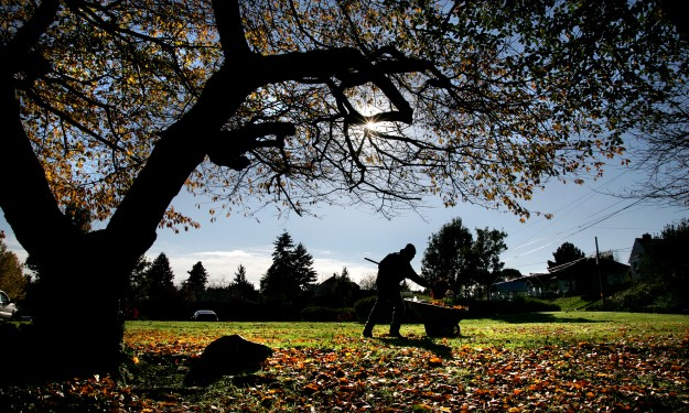 Kevin Cunningham picks up leaves at Evergreen-Rotary Park in Bremerton, Wash. on a sunny but chilly Thursday, November, 13, 2014. (LARRY STEAGALL / KITSAP SUN)