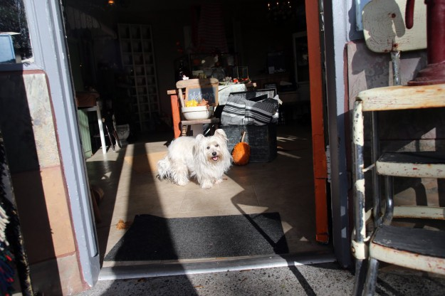 Rajean Barone's dog Lizzie greets customers as they enter her Found shop in the Manette neighborhood of Bremerton on Friday, November 7, 2014. (MEEGAN M. REID / KITSAP SUN)