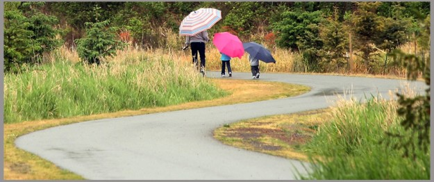 A trio of pedestrians carry umbrellas as they walk along the Clear Creek Trail in Silverdale on Tuesday, May 21, 2013. (MEEGAN M. REID / KITSAP SUN)